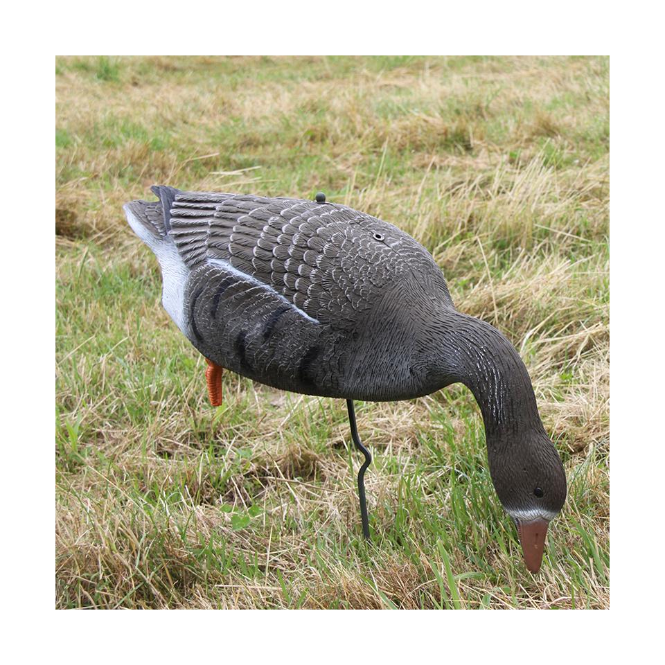 Lockvogel Blässgans
